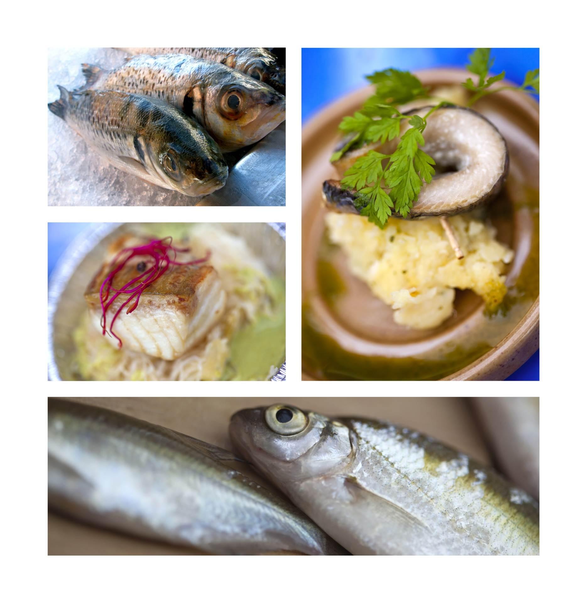 Riba je višestruko korisna za organizam