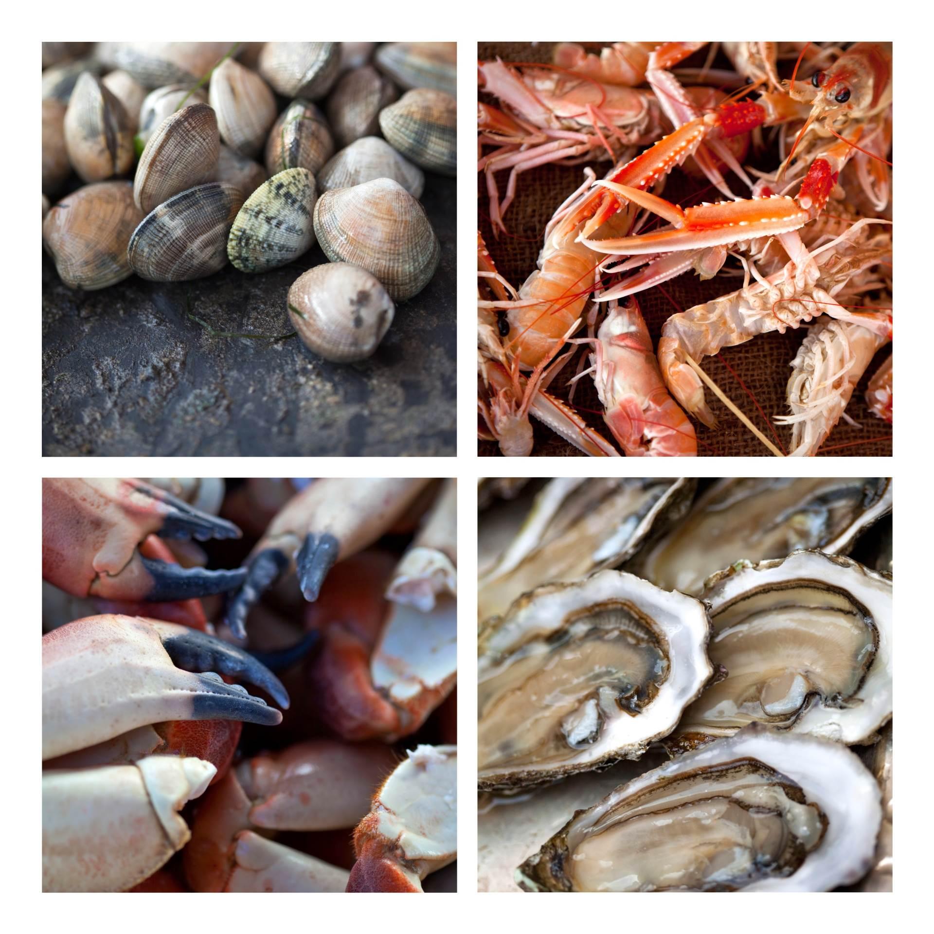 Morski plodovi predstavljaju bogat izvor izvor esencijalnih aminokiselina