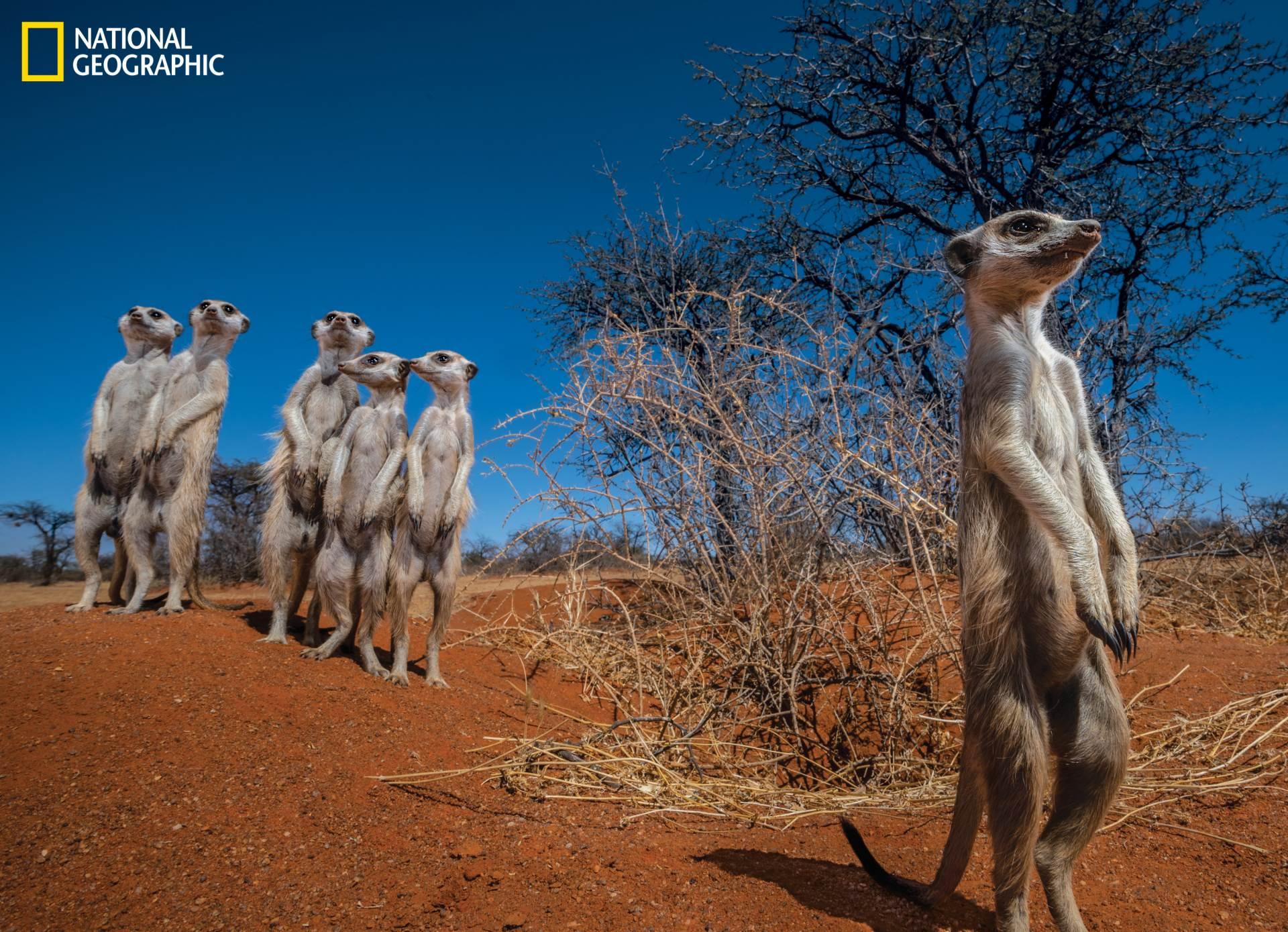 Kalahari na rubu opstanka