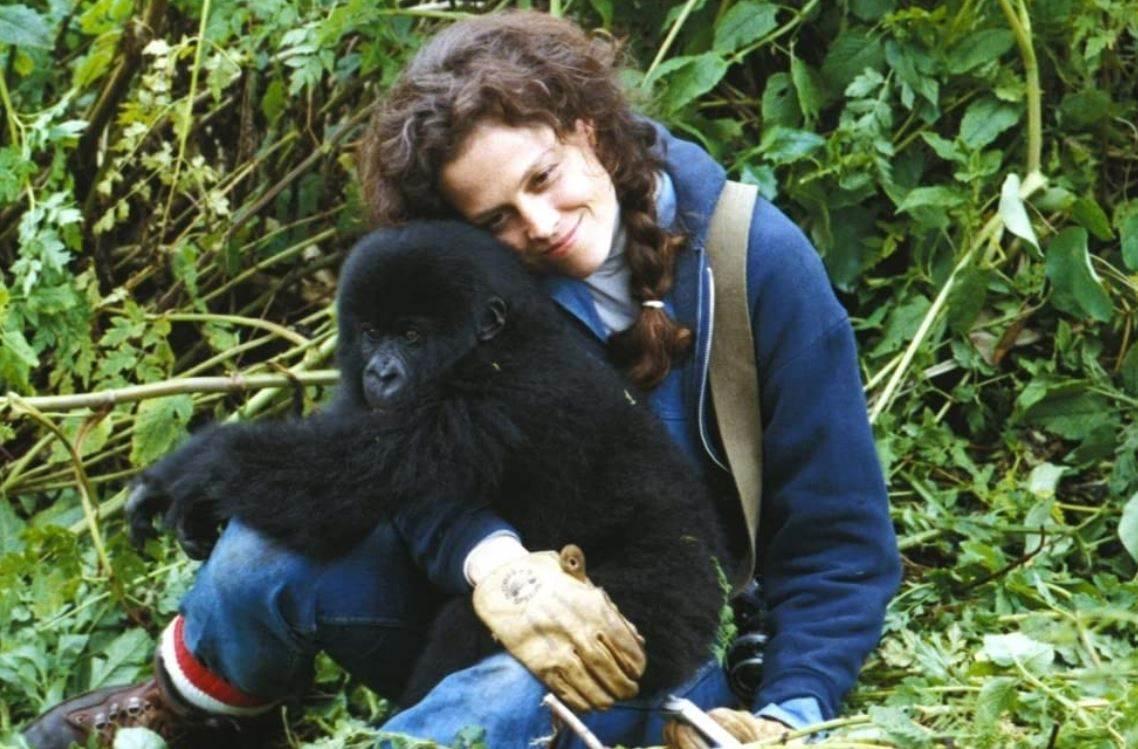 Film Gorile u magli